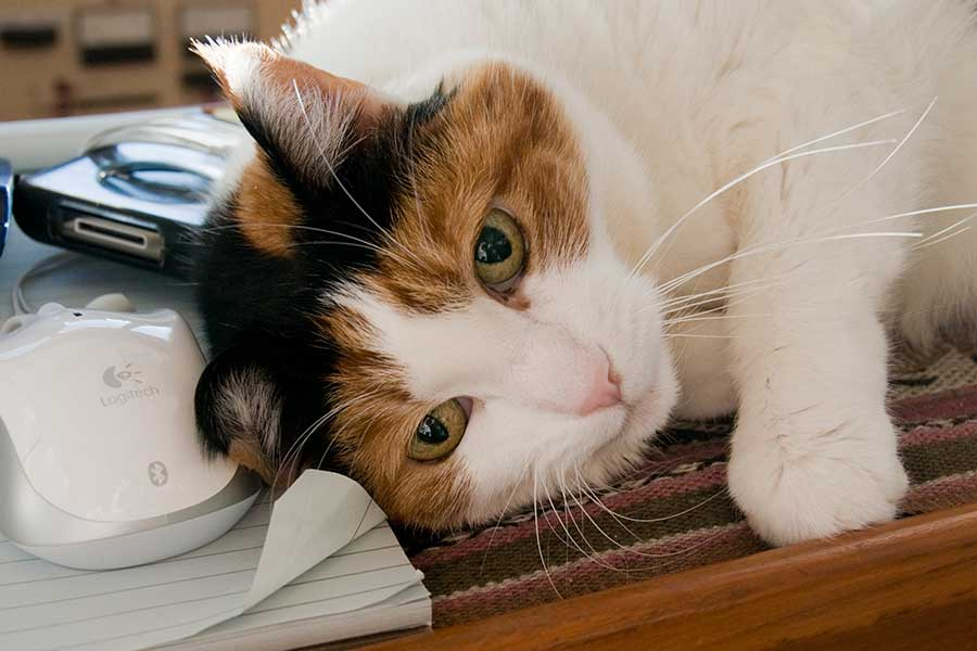 wet cat food for urinary health