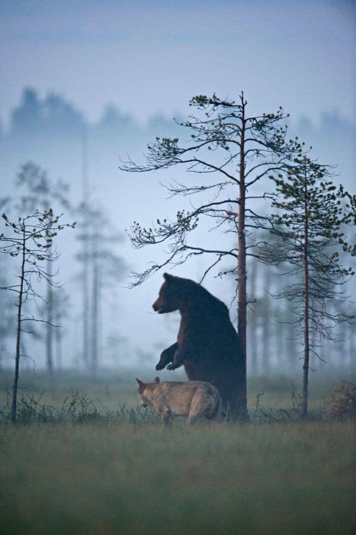 Unusual Animal Friendship Documented By Finnish Photographer
