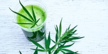 Juicing Cannabis1